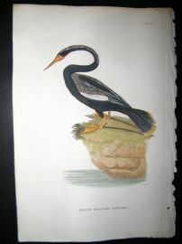Shaw C1800's Antique Hand Col Bird Print. Black Bellied Darter